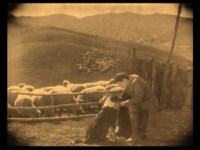 This a very sheep-heavy movie.