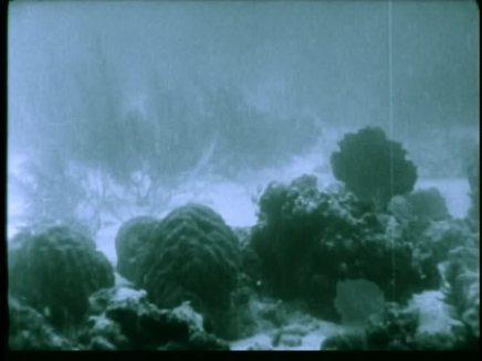 twenty thousand leagues under the sea 1916 image (71)